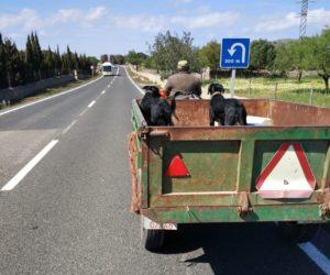 Arta Radsport Mallorca
